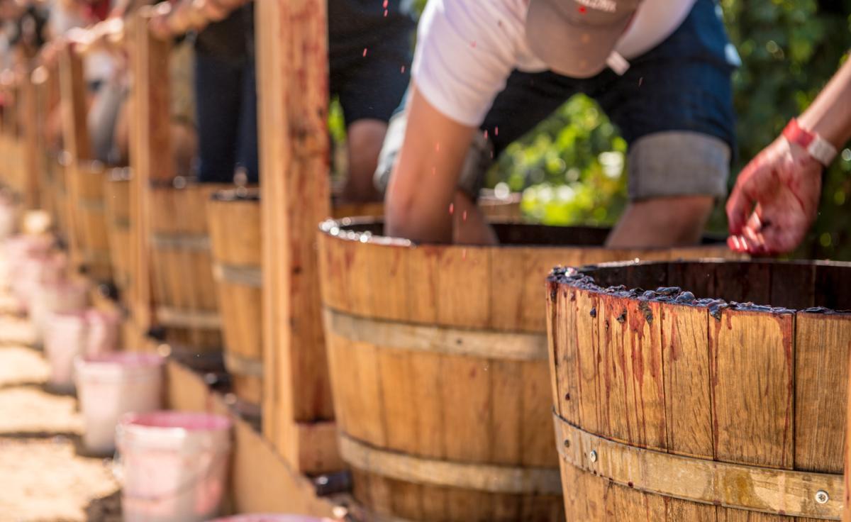 Wine Harvest Grape Smashing